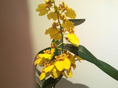 Мои орхидеи - 2016-10-21 20.09.40.jpg