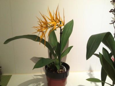 Мои орхидеи - 2016-10-21 20.12.19.jpg