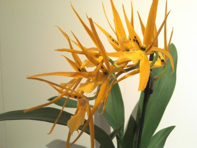 Мои орхидеи - 2016-10-21 20.12.42.jpg