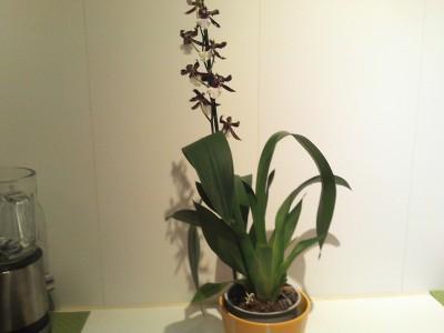 Мои орхидеи - 2016-10-21 20.12.57.jpg