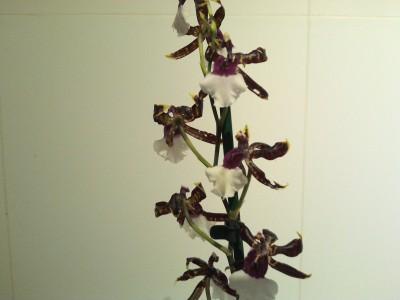 Мои орхидеи - 2016-10-21 20.13.34.jpg