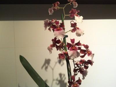 Мои орхидеи - 2016-10-21 20.14.27.jpg