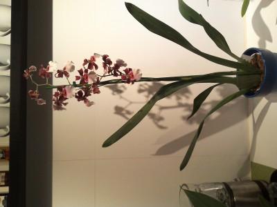 Мои орхидеи - 2016-10-21 20.15.11.jpg